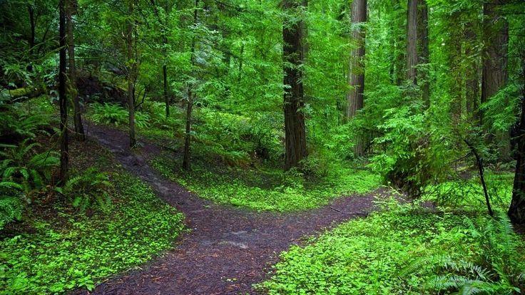 forest walks | HD Green Forest Walk Wallpaper | Forest ...
