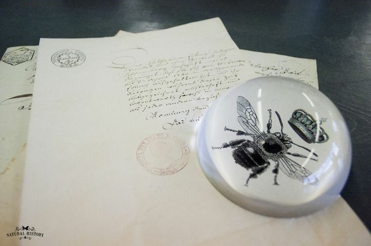 Napoleon Bee Paperweight from Natural History