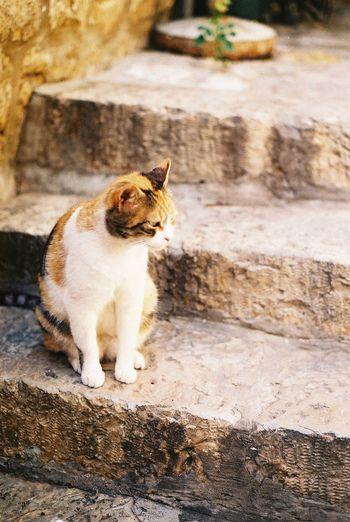 「ゆっくりしてってよー」日向ぼっこをする三毛猫さん。そう、ここドゥブロヴニクは、動物写真家の岩合光昭さんも「世界ネコ歩き」で訪れた、知る人ぞ知る猫の街なのです。