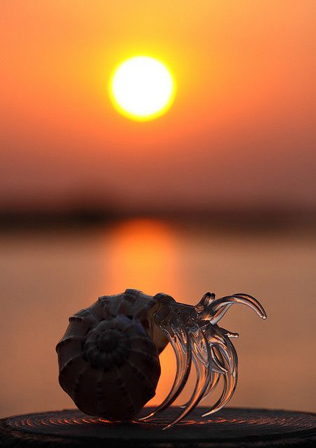 Hoping for a wonderful tomorrow ~ by Spice ♥ Darling on Flickr: Shells, Nature, Wonder Tomorrow, Ocean Beaches, Amazing Shots, Photo, Feeling Crabbi, Sun, Hermit Crabs