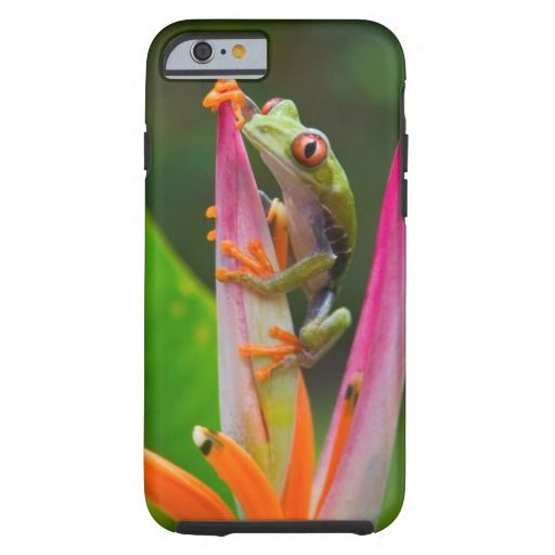 Red-eye tree frog, Costa Rica 2 Tough #iPhone 6 #Case #cute
