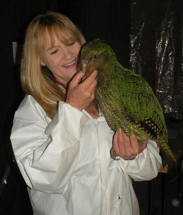 Lernen Sie den Kakapo kennen, einen entzückenden, hundeartigen Vogel, den Neuseeländer unbedingt …   – Exotic Birds