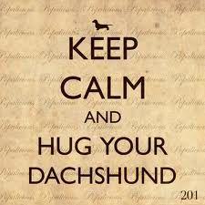 Keep calm and hug a dachshund :)