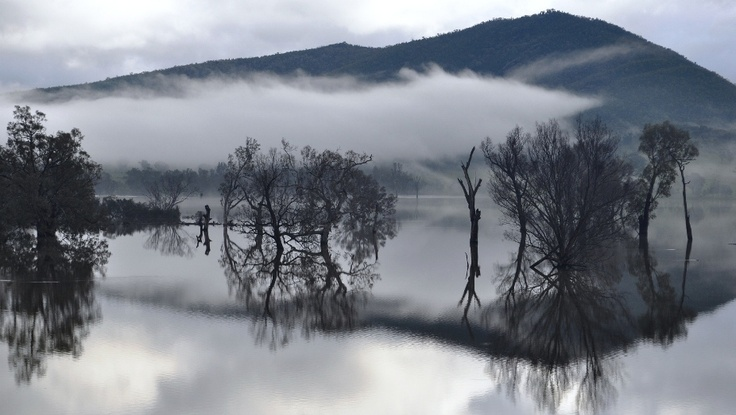 Foggy morning on the Murray River