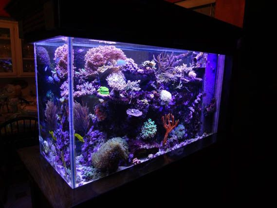 Reef Central Online Community. All things re reef tanks.