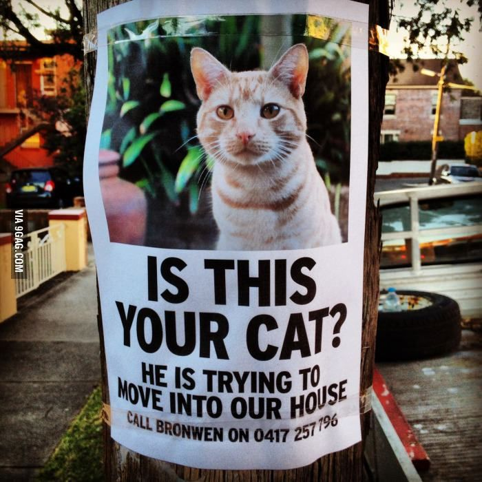 Cat Unwanted via metapicture #Ad #Humor #Cat