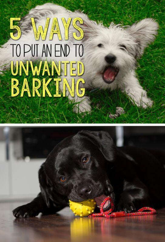 "It's difficult to get a dog to stop barking, particularly if they are bored and just ""nuisance"" barking. The good news is that there are many ways to train your dog to stop barking, even when you're not at home."