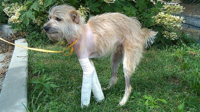 Dog Finds His Way Home After Alabama Tornado!