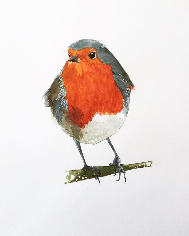 A Robin for grief
