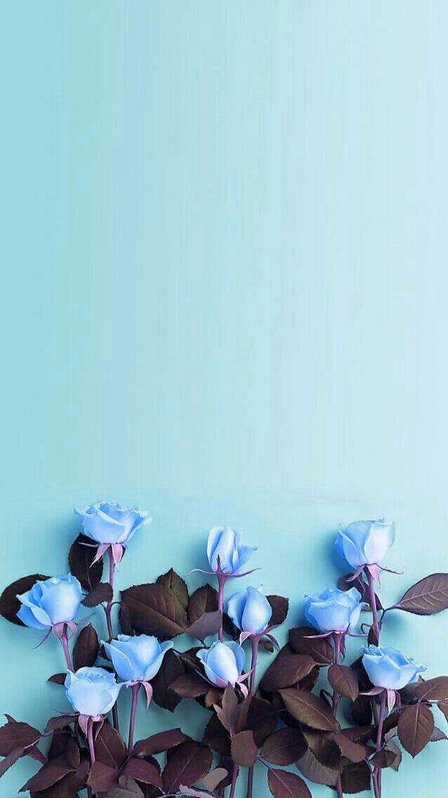 Pinterest Nor Syafiqah Blue Flower Wallpaper Flowers