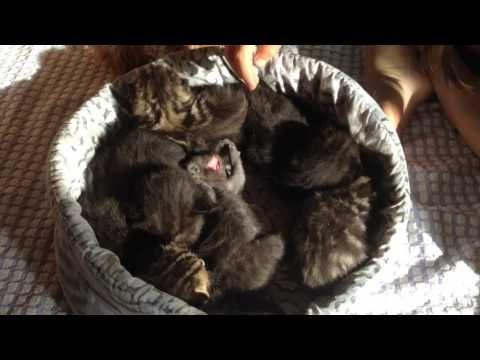 Кошка, новорожденные котята.