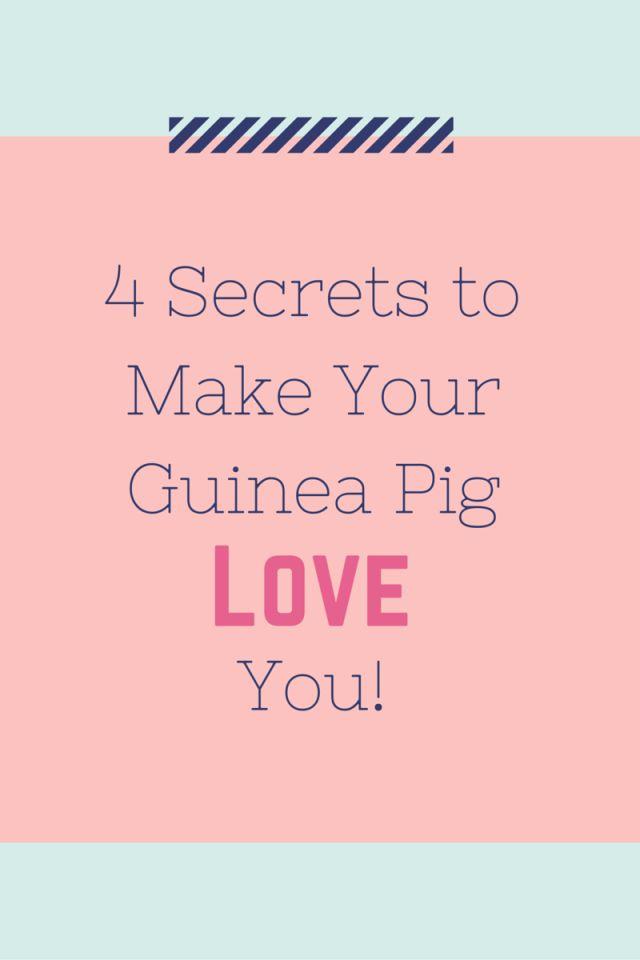 4 secrets to make your guinea pig love you encaje chicas y animales. Black Bedroom Furniture Sets. Home Design Ideas