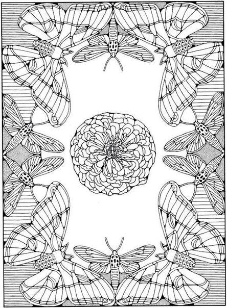 ~this Could Be the most awesome design for a whole cloth quilt! From a  Butterfly Coloring Page