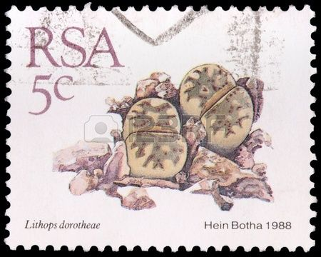 SOUTH AFRICA - CIRCA 1988: A 5-cent stamp printed in the Republic of South Africa shows  plants of a desert succulent, the living stone Lithops dorotheae, circa 1988