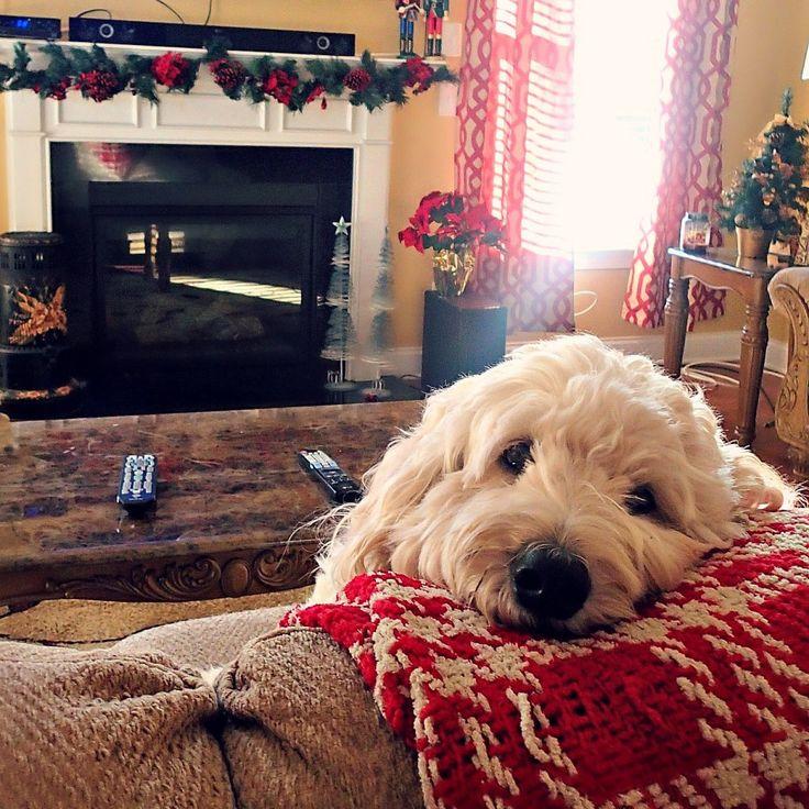 Operation: Christmas Spirit. – Simply Taralynn