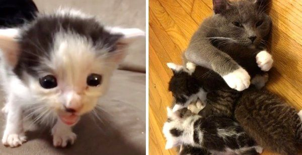 Cat Who Needed Kittens Becomes Mom To Kitties Abandoned Outside Library Cats Baby Cats Kittens