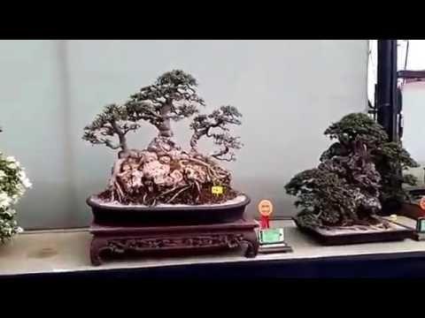 BEAUTIFUL   BONSAI   SHOW
