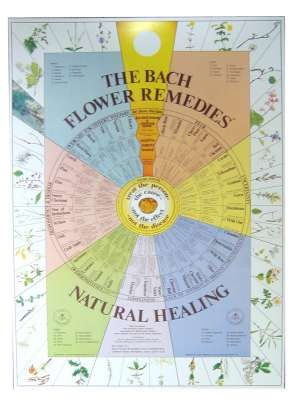 Bach Flower Chart Laminated, need this for my Naturopathy course!
