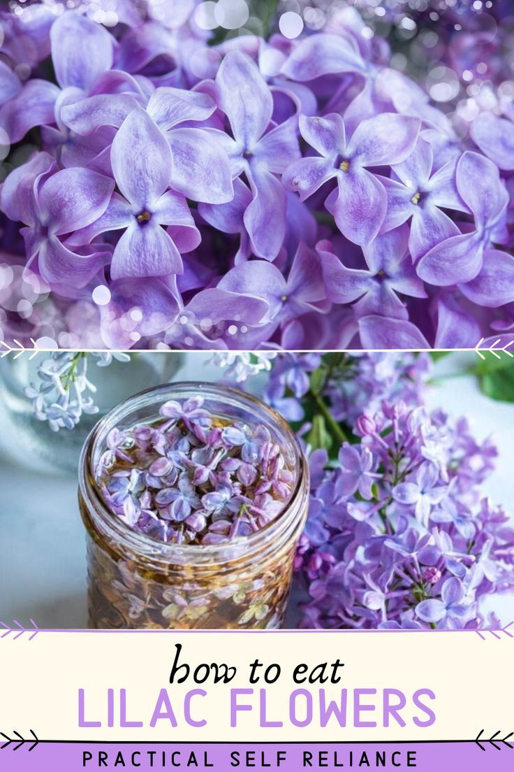 How To Eat Lilacs And Other Ways To Use Them In 2020 Edible Flowers Edible Flowers Recipes Flower Food