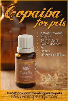 copaiba - Analgesic, antibacterial, anti-inflammatory, antiseptic, stimulant (circulatory and pulmonary systems).