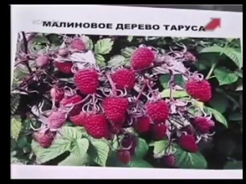 Малина.Мастер класс.Марина Рыкалина и Виталий Декабрев.