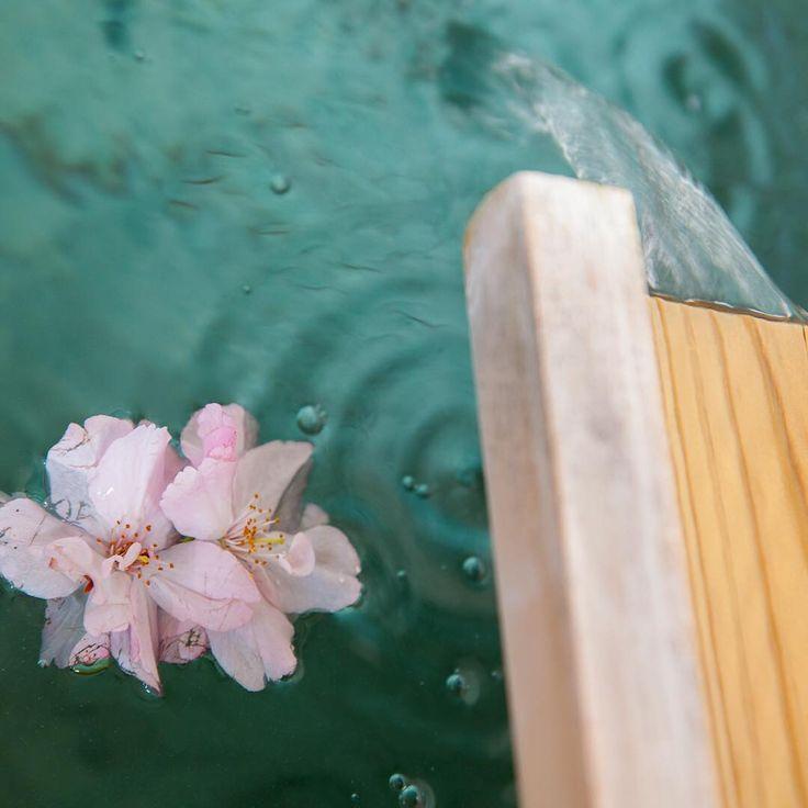 Open Air Bath With Sakura