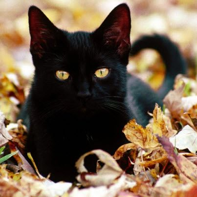 It's National Black Cat Day. I LOVE black cats – all sleek, slinky and cuddly.
