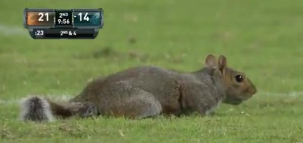 'Football squirrel' interrupts Philadelphia Eagles game