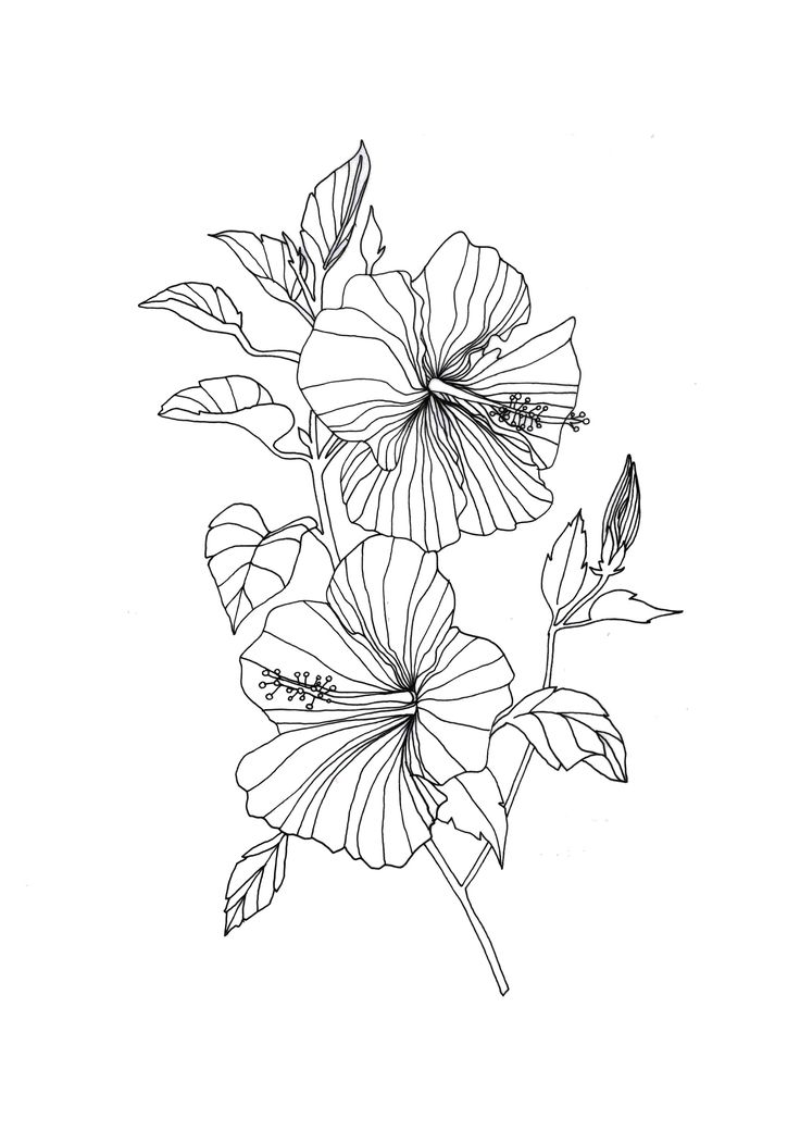 Hibiscus Flower A3 A4 A5 Illustration Drawing