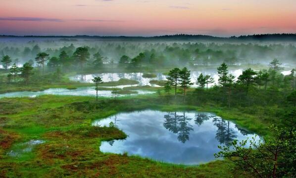 Morning in Estonian bog