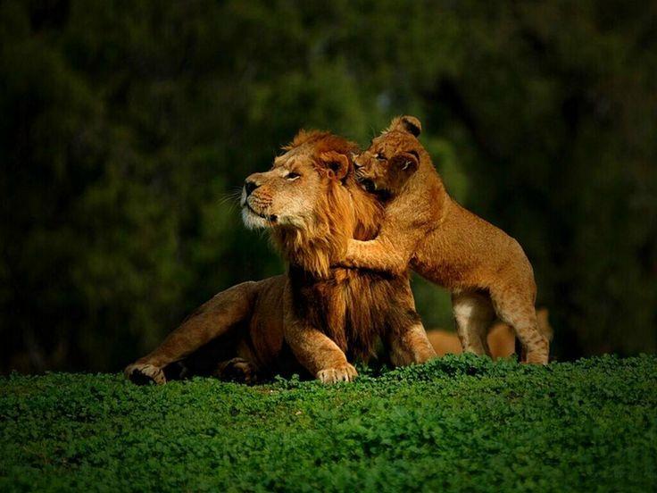 子どもと遊ぶライオン