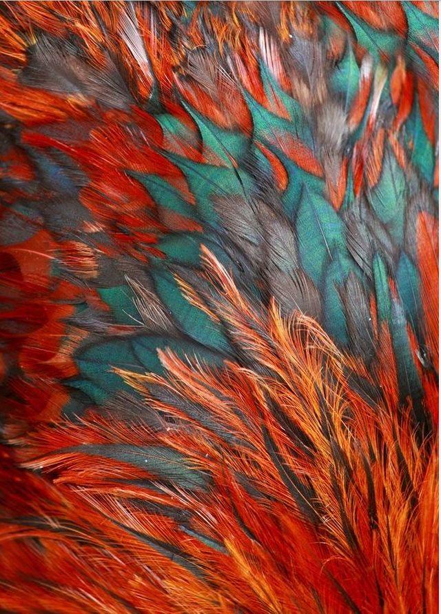 Best 25 Teal orange ideas on Pinterest  Teal orange