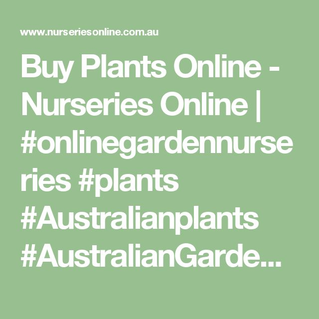 Buy Plants Online - Nurseries Online | #onlinegardennurseries #plants #Australianplants #AustralianGardenNurseries #gardening #garden