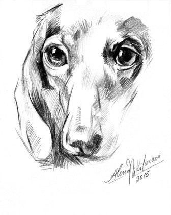 Dog Dachshund portrait  by Alena Nikifarava~Downloadable and printable Artwork~ $5.00 on Etsy. Drawing, Sketch