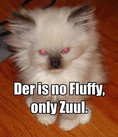 LOLCats! #lolcats #lol #lulz #lmao #funny #humor #cats #kittens #animals #kitten #meme #memebase #grumpy cat #cat shaming