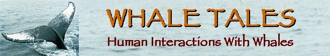 Whale Tales - Human Interactions with Whales
