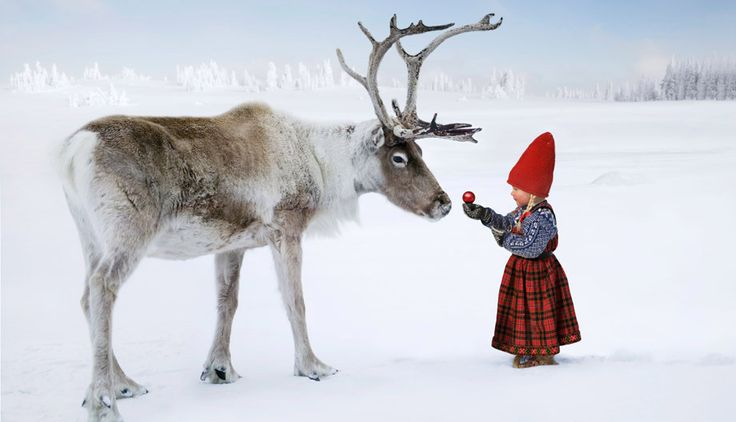 Anjas Arctic Fairytale The Christmas Wish, a Classic Christmas Story | LITTLE SCANDINAVIAN