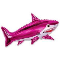 Pet Shark :p