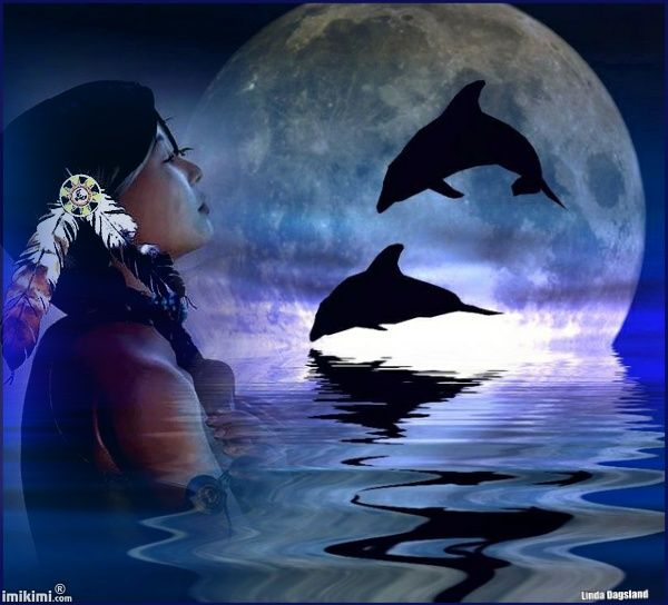 Moonlight Dolphins