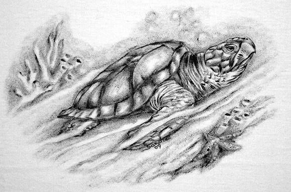 tatuagem tartaruga marinha - Pesquisa Google