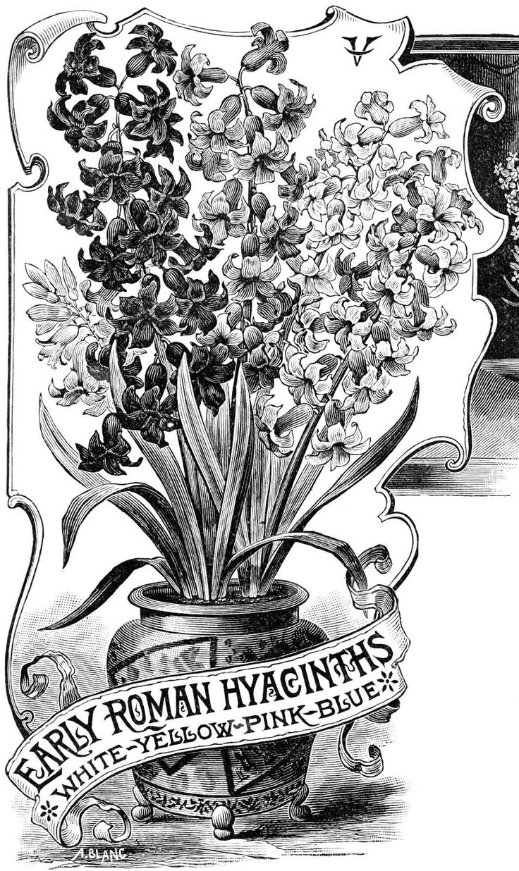 556 best graphics images on pinterest graphics fairy vintage