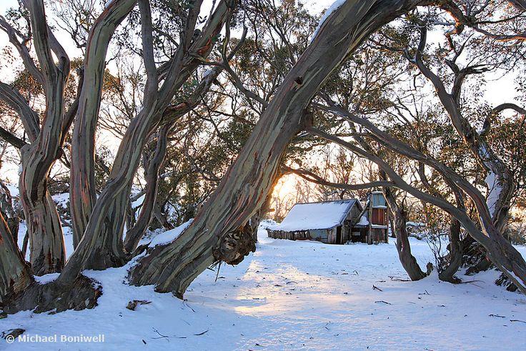 Wallace Hut Dawn, Falls Creek, Victoria, Australia. Photography by Michael Boniwell, Chockstone Photography.