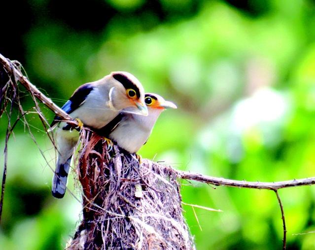 Kaeng Krachan National Park, Thailand | Home  Tours in Hua Hin & Cha Am  Kaeng Krachan National Park and ...