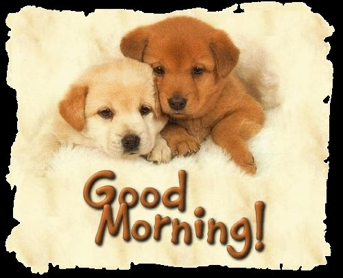 Good Morning Puppies Pictures, Photos, and Images for Facebook ...