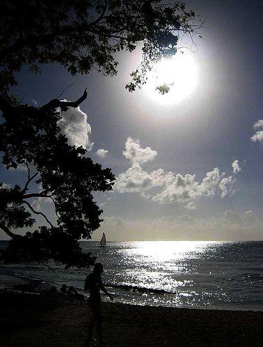 Moonlight - Barbados Beach, The Caribbean #fullmoon #clouds #sea #beach #tree #person