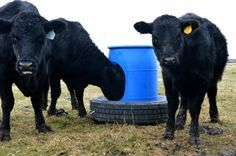 DIY Animal Mineral Feeder Today's post is a contribution from my husband David. Thanks to the partnership we have with Discount Tire on this post, we are sharing our recycled tire DIY project for inspiration. I was looking on craigslist and other online boards for a mineral feeder for our cattle when I found a video […]