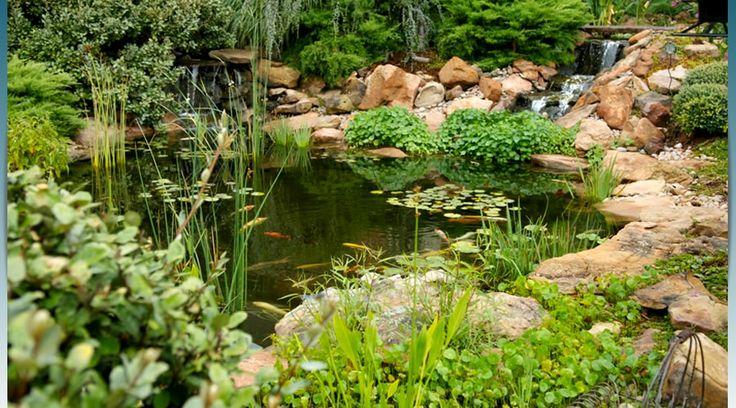 33 best my future koi pond ideas images on pinterest for Koi pond quezon city
