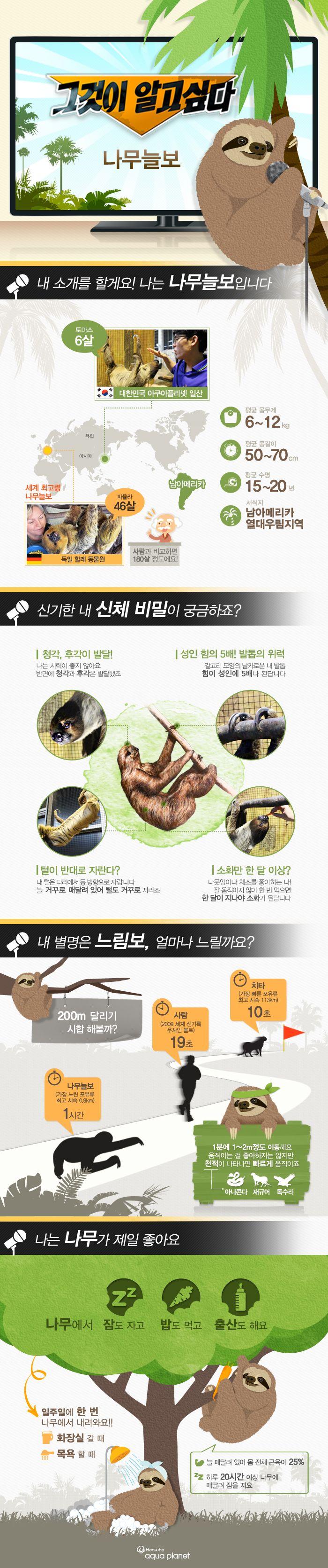 느림보 '나무늘보'에 관한 인포그래픽