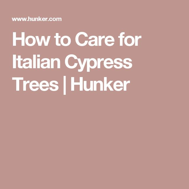 How to Care for Italian Cypress Trees | Hunker