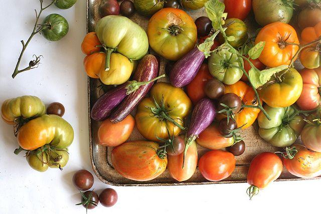 Harvest tomatoes: Edible Delights, Fruit, Edible Gardens, Food Porn, Amy Merrrick, Amy Merrick, Food Photography, Food Lovers